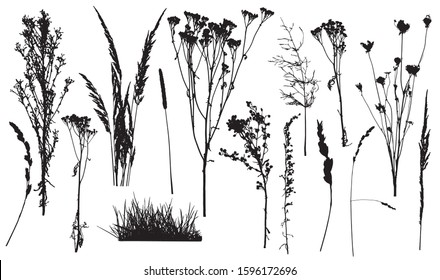Silhouettes of weed plants, set of wild plants and grass. Vector illustration.
