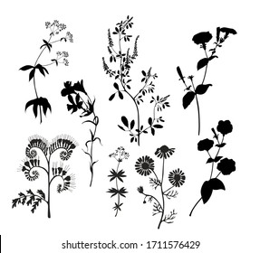 Silhouettes of wild flowers. Vector graphics.