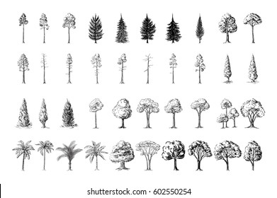 Silhoutte of trees on a white background