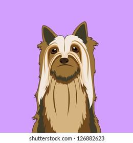 Silky terrier, The buddy dog
