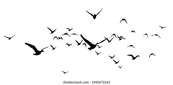 The Siluettes of flight ducks in the sky.