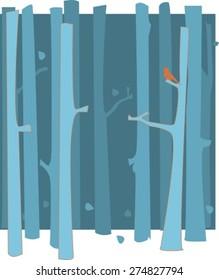 Silver Birch Tree Forest in Winter/Autumn/Fall, Bird in the Tree
