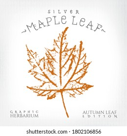 Silver Maple Leaf Vintage Print Style Illustration with Authentic Logo Lettering from Autumn Leaf Edition of Graphic Herbarium - Black and Rusty on Grunge Background - Vector Stamp Graphic Design