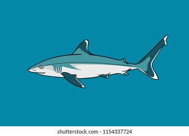 Silvertip shark fish predator swimming in ocean water vector zoological naturalistic color illustration