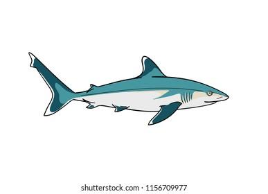 Silvertip shark fish predator vector zoological naturalistic color illustration