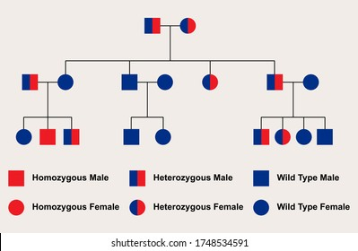 Simple autosomal recessive pedigree chart, heterozygous parents, located on an autosome (non-sex chromosome)