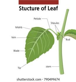 Plant Part Images Stock Photos Vectors Shutterstock