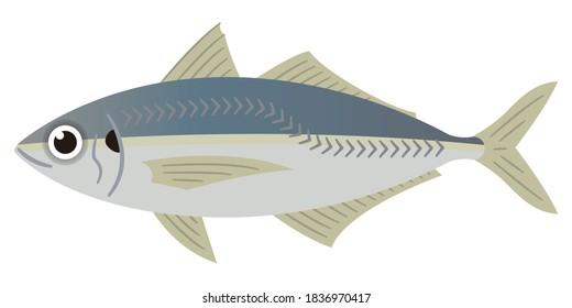 Simple illustration of horse mackerel on white background