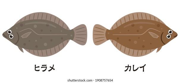 Simple illustration of left-pointing flatfish and right-pointing flatfish. Japanese characters translation:flatfish