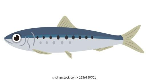 Simple illustration of sardines on white background
