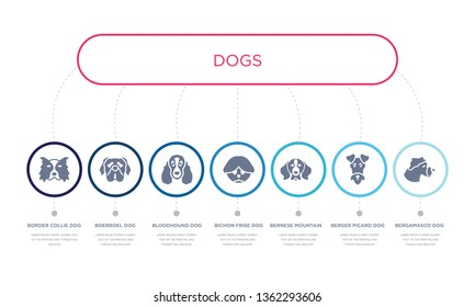 simple illustration set of 7 vector blue icons such as bergamasco dog, berger picard dog, bernese mountain dog, bloodhound boerboel border collie infographic design with 7 icons pack