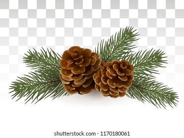 A simple rural Christmas composition - branches of a Christmas tree / cedar and cones. Isolated. vector illustration. Eps 10.
