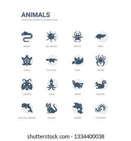 simple set of icons such as centipede, zander, baboon, dolphin jumping, squirrel, lemur, squid, ladybug, spider, dove. related animals icons collection. editable 64x64 pixel perfect.