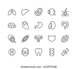 Ic Organlar Stock Vectors Images Vector Art Shutterstock