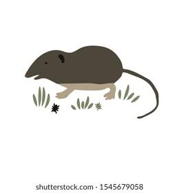Simple shrew animal vector illustration
