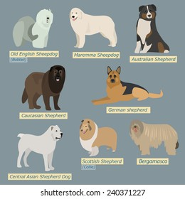 Simple silhouettes of dogs. Types of sheepdogs in flat design