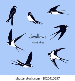 Simple Swallows on a light blue background. Five flying and two sitting swallows in cartoon style. Flying birds in different views. Black and white birds. Design elements.