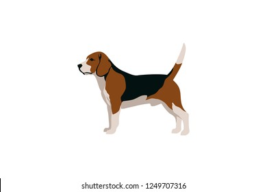 Simple Vector of Beagle Dog