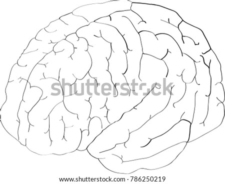 Simple Vector Illustration Human Brain On Stock Vector Royalty Free