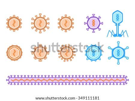 Simple Viruses Diagram Describing Rna Dna Stock Vector Royalty Free