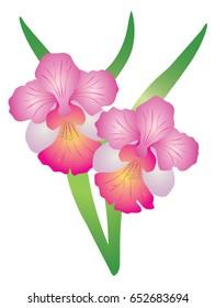 Singapore National Flower Vanda Miss Joaquim Orchid. vector Illustration