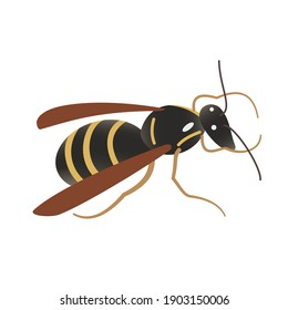 Single cartoon cute wasp isolated on white background. Hand-drawn vector. An insect with wings. Yellow stripes on the black belly. Design element for illustrations, children's manuals, printing.