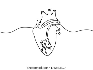 Single continuous line art anatomical human heart silhouette. Isolated heart on white background. Healthy medicine concept design one sketch outline drawing. Linear style. Vector illustration