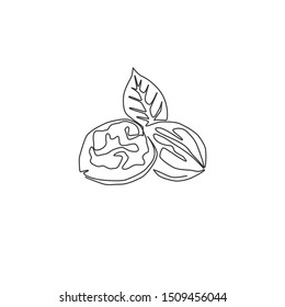 Single continuous line drawing of whole healthy organic walnut and leaves for orchard logo identity. Fresh nutshell concept for healthy seed icon. Modern one line draw design vector illustration
