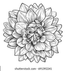 A single dahlia or chrysanthemum woodcut flower in a vintage retro engraved etching style