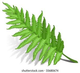 Single fern leaf isolated on white background , vector illustration