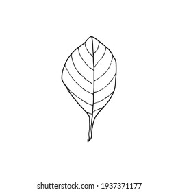 Single hand drawn leaf. In doodle style, black outline isolated on a white background. Cute element for card, poster, social media banner, sticker. Vector illustration.