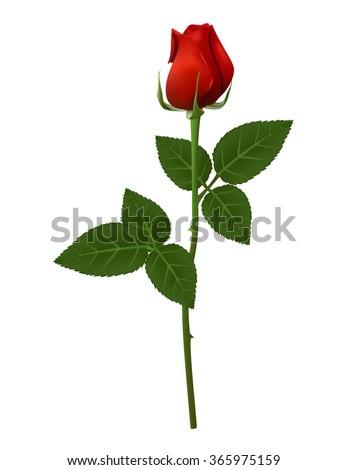 Single Red Rose Flower Vector Illustration Stock Vector