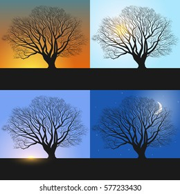 Single tree, Banners showing day sequence - morning, noon, evening and night.