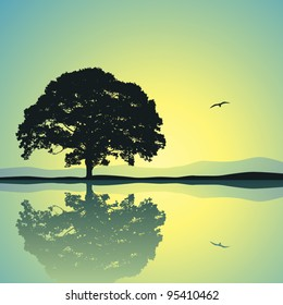 A Single Tree Standing Alone with Reflection in Water