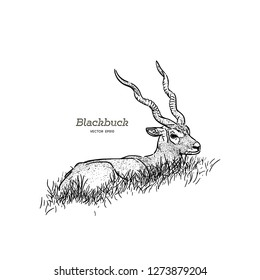 Sitting blackbuck antelope Strepsiceros cervicapra, illustration vector.