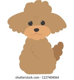 Sitting dog (toy poodle)
