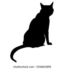 Sitting domestic cat. Black silhouette on white background.