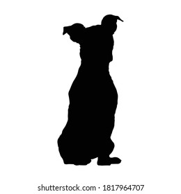 Sitting Jack Russel Terrier Dog On a Front View Silhouette Found In Germany. Good To Use For Element Print Book, Animal Book and Animal Content
