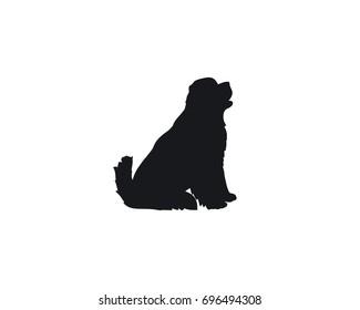 sitting newfoundland dog vector