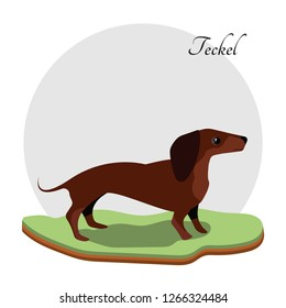 Sitting on the grass. Waiting for her master. Beautiful animal. Dachshund. Brown dog. Teckel dog. Brown small dog