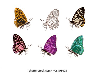 six butterfly hand drawing set