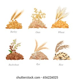 Six cereals batches with their plants near it / There are barley, oats, wheat, buckwheat, rye and rice grains in batches