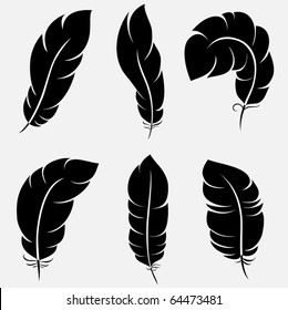 Six elegant feathers for your design and decoration