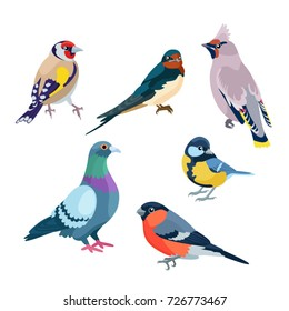 Six sitting birds: goldfinch, swallow, waxwing, pigeon, bullfinch and titmouse