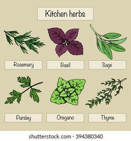 Six type of kitchen herbs: rosemary, basil, sage, parsley, oregano, thyme