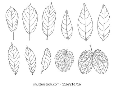 Skeletal  Leaves lined design on white background illustration vector