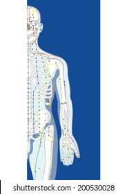 Skeletal structure and pressure points