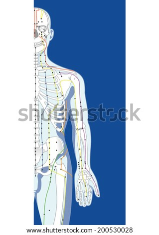 Skeletal Structure Pressure Points Stock Vector (Royalty Free ...