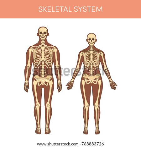 Skeletal System Human Cartoon Vector Illustration Stock Vector
