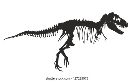 Skeleton of  dinosaur